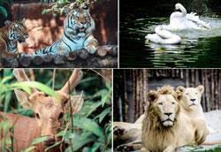 Mái ấm động vật hoang dã vinpearl safari