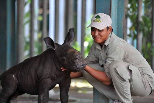 tê giác vinpear safari phú quốc