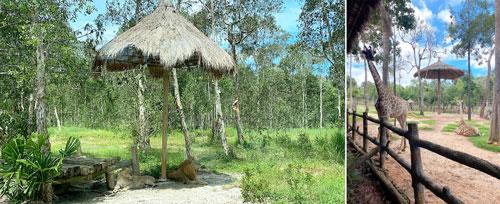 safari phú quốc 4