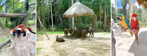safari phú quốc 6