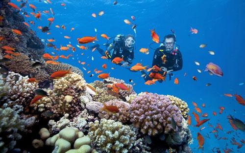 bình dưỡng khi lặn san hô