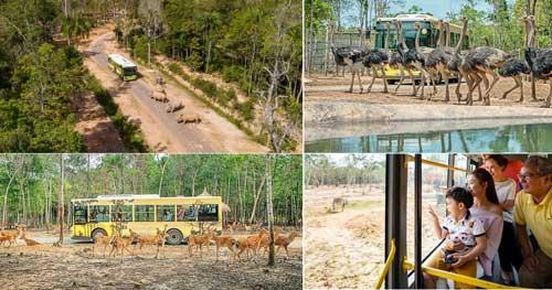 thi thăm động vật hoang dã bằng xe bus