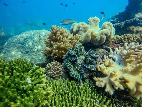 thung lũng san hô
